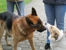 2011.10.09 Błogosławieństwo zwierząt